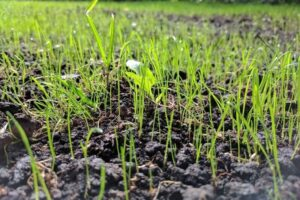Best Fertilizers for Your Lawn – My Top 10 Recommendations