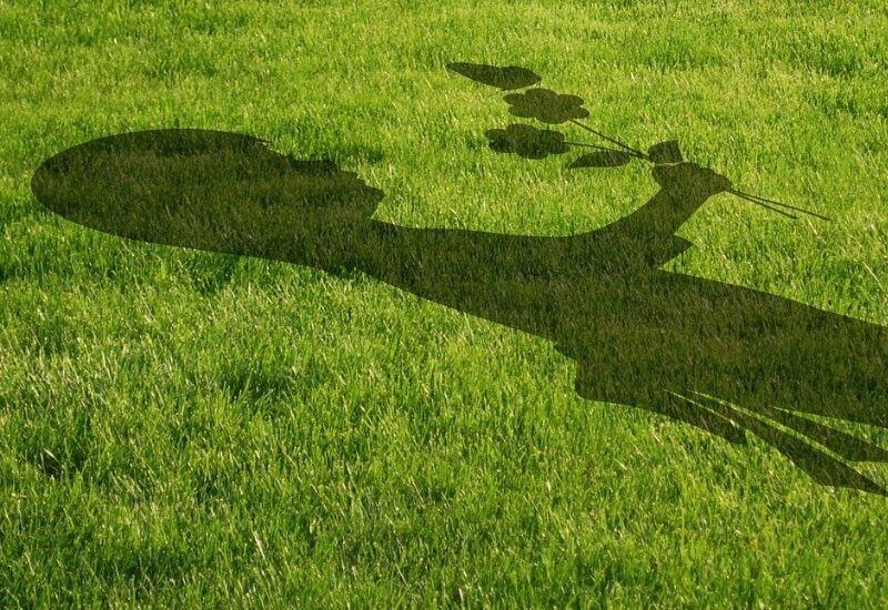 Rejunevate Lawn