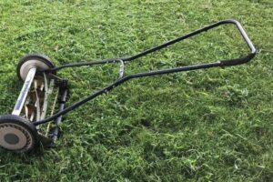 The 8 Best Rotary Lawn Mowers