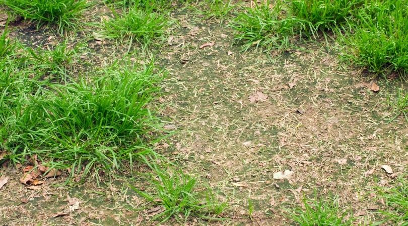 Unhealthy lawn with spots