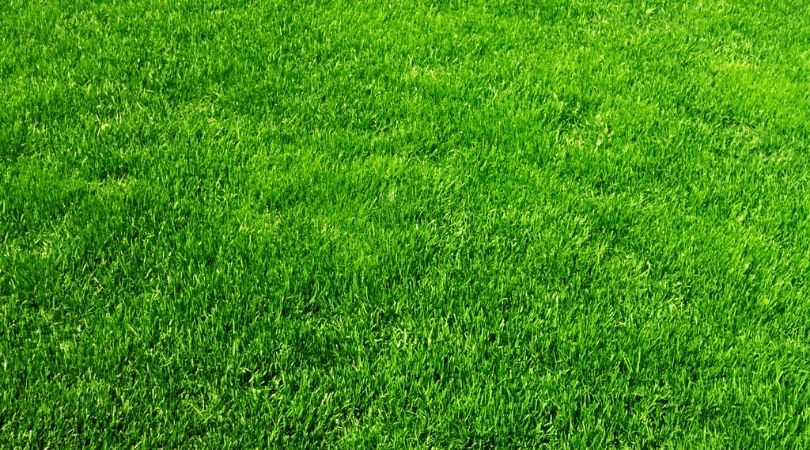 Green and healthy lawn